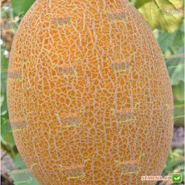 Дакаро F1 семена дыни тип Ананас ультраранней 65-70 дн. 1,5-2,5 кг овал. оран./бел. (Enza Zaden)