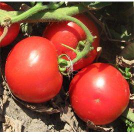 Волна F1 семена томата дет. средний 110 дн. окр. 180-200 гр. (Vilmorin)