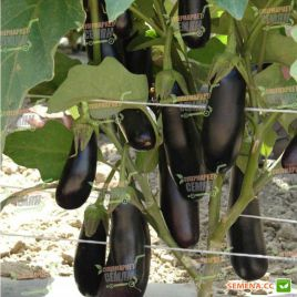 Дестан F1 семена баклажана тип Алмаз раннего 85-95 дн. 250-300 гр. 18 см овал.-цил. (Enza Zaden)