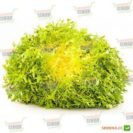 Домари семена салата тип Эндивий зел. (Enza Zaden)