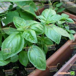 Эдвина Organic семена базилика зеленого (Enza Zaden/Vitalis)