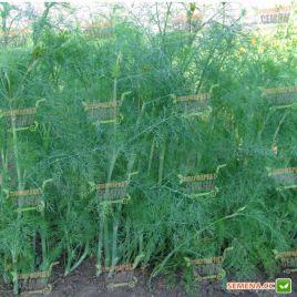 Голдкрон семена укропа (Enza Zaden)