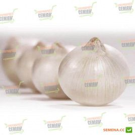 Авалон F1 семена лука репчатого среднепозднего 125-130дн. 120гр белого (Moravoseed)
