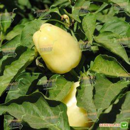 Беатрикс F1 семена перца сладкого тип Венгерский раннего конич.150-170г. желт.-бел./красн. (Moravoseed)
