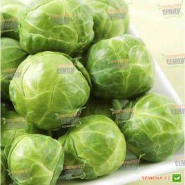 Долорес F1 семена капусты брюссельской среднепоздней 150 дн. (Moravoseed)