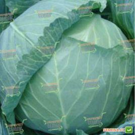 Гелиос F1 семена капусты б/к средне-ранней (Moravoseed)