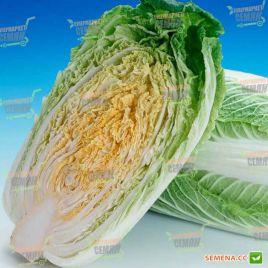 Гилтон семена капусты пекинской ранней 58-65 дн. 1,2-1,6 кг (Moravoseed)