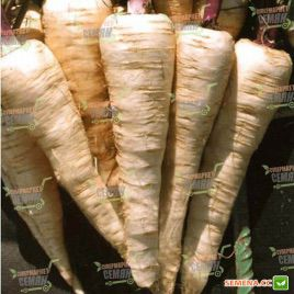 Камо семена пастернака 150-170 дн. (Moravoseed)