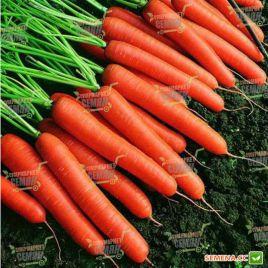 Кортина F1 семена моркови Флакке поздней 150-160 дн (Moravoseed)