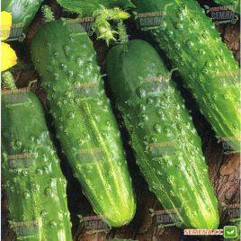 семена огурца корвета f1