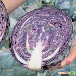 Квит F1 семена капусты к/к поздней 125-135 дн 1,9-2,3 кг окр. (Moravoseed)
