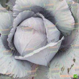 Модерат F1 семена капусты к/к среднепоздней 115-125 дн 2-2,5 кг (Moravoseed)