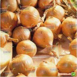 Олина семена лука репчатого среднего 130-132 дн 130-135 гр (Moravoseed)