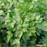 Росава семена петрушки листовой (Moravoseed)