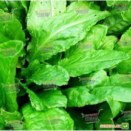 Широколистный семена щавеля (Moravoseed)
