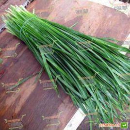Страда семена лука на перо среднераннего (Moravoseed)