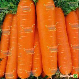 Тинга семена моркови Флакке поздней 155-160 дн (Moravoseed)