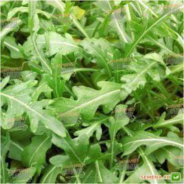 Вайлд Рокет семена рукколы (Moravoseed)