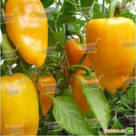 Злата семена перца сладкого тип Венгерский среднего 95-110 дн. конич. 130 г. 5-6мм желт./красн. (Moravoseed)
