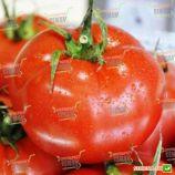 Айвенго F1 насіння томату індет. (Rijk Zwaan)