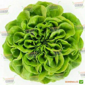 Аквино семена салата тип Саланова/Маслянистый зел. дражированные (Rijk Zwaan)