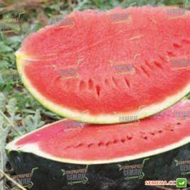 Баронеса F1 семена арбуза тип Шуга Беби среднераннего 70-75 дн. 8-10 кг (Rijk Zwaan)