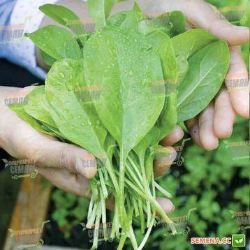 Бoa семена шпината (Rijk Zwaan)
