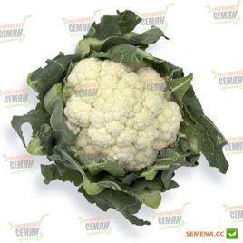 Декстер F1 семена капусты цветной средней 75-95 дн. 1,5-2 кг (Rijk Zwaan)