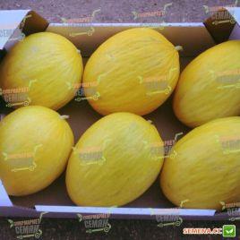 Дукрал F1 семена дыни тип Желтая канарская средней 70-75 дн. 2,5-3 кг овал. жел./бел. (Rijk Zwaan)