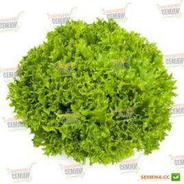 Экзакт (Экзект) семена салата тип Саланова зел. дражированные (Rijk Zwaan)