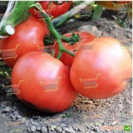 Эсмира F1 семена томата индет. ультрараннего 105 дн. окр. 190-220г роз. (Rijk Zwaan)