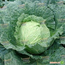 Эстрема F1 семена капусты савойской ранней 80-100 дн. 1,8-4 кг (Rijk Zwaan)