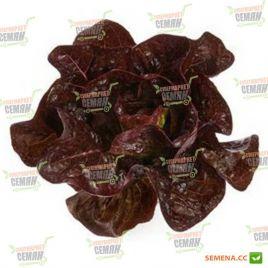 Галатея семена красного салата тип Ромэн красн. дражированные (Rijk Zwaan)