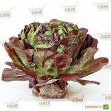 Гоген семена салата тип Маслянистый (Саланова) красн. дражированные (Rijk Zwaan)