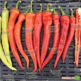 Янка F1 семена перца горького тип Каппи раннего удлинен. 50-60гр. 20х25 см 2-х камерн. 5-7 мм сл.кость/красн. (Rijk Zwaan)