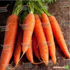 Каротан семена моркови Флакке (Rijk Zwaan)
