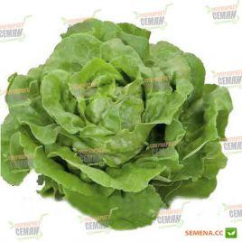 Хунгарина семена салата тип Маслянистый дражированные (Rijk Zwaan) НЕТ СЕМЯН