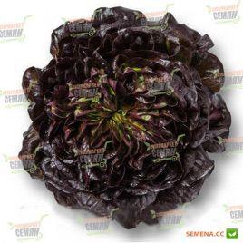 Кли семена салата тип Саланова красн. дражированные (Rijk Zwaan)