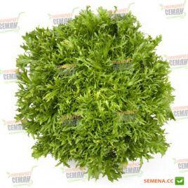 Корби семена салата тип Эндивий зел. дражированные (Rijk Zwaan)