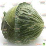 Лагрима F1 семена капусты б/к поздней 125-140 дн. 2,5-5,5 кг окр. (Rijk Zwaan)