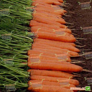 Монанта семена моркови Нантес (Rijk Zwaan)