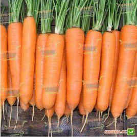 Морелия F1 (1,4-1,6) семена моркови Нантес. средней 120 дн. (Rijk Zwaan)