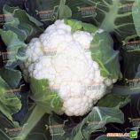 Опал семена капусты цветной (Rijk Zwaan)