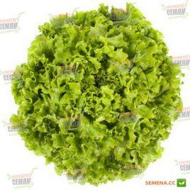 Отили семена салата тип Батавия св.-зел. дражированные (Rijk Zwaan)