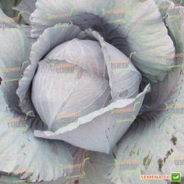 Ред Харизма F1 семена капусты к/к среднепоздней 100 дн. 2-3 кг (Rijk Zwaan)