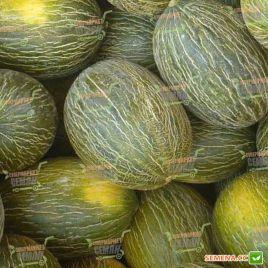 Реймил F1 семена дыни тип Пиел де Сапо среднепоздней 85 дн. 4-5 кг удл.-овал. зел./бел. (Rijk Zwaan)