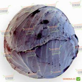 Рексома F1 (калибр.) семена капусты к/к поздней 110-130 дн. 1,5-3 кг (Rijk Zwaan)