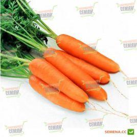 Рига F1 семена моркови Нантес. (калибр больше 1,6) (Rijk Zwaan)