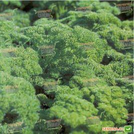 Рина семена петрушки (Rijk Zwaan)
