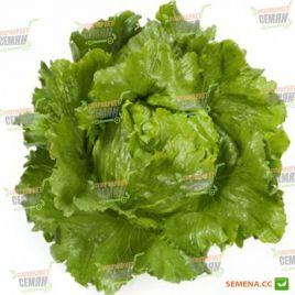 Сантаринас семена салата тип Айсберг зел. дражированные (Rijk Zwaan)